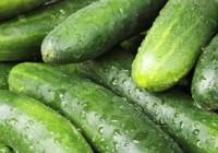 Las exportaciones de pepino crecen un 39% y dejan  251,9 millones en la balanza andaluza entre enero y mayo