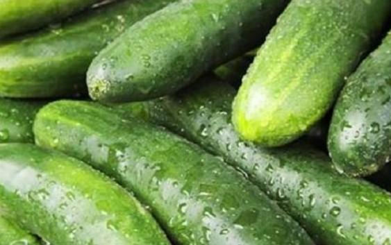 La Mesa Sectorial de Hortalizas aborda la situación de mercado del pepino