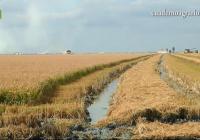 VÍDEO: Tratamiento para proteger el cultivo del arroz