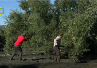 La Junta apoya al sector olivarero andaluz con  29 millones de euros en ayudas para agroindustrias