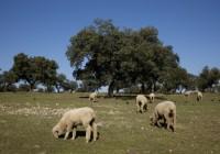 La Junta publica la excepcionalidad de pastoreo en superficie de barbecho de interés ecológico para el pago verde en 2017