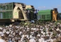 La Junta informa de las desmotadoras autorizadas para recibir el algodón de la ayuda específica de la PAC