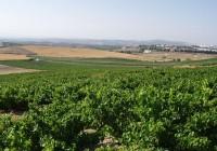 Las exportaciones de vino de Córdoba crecen un 15,7% en el primer semestre del año y superan los 3,9 millones de euros