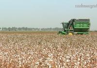 Agricultura reconoce a la Organización Interprofesional Agroalimentaria Andaluza para el Algodón