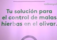 VÍDEO: Adama propone estrategias herbicidas en el olivar