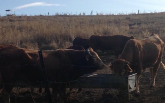 UPA Andalucía preocupada por la ganadería ecológica