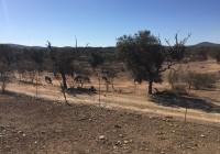 COAG Andalucía pide financiación urgente para los profesionales afectados por la sequía