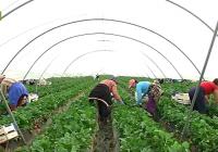El precio de la hectárea de invernadero se revaloriza en Almería más de un 25% en sólo tres años