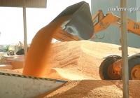 VÍDEO: Almacenado todo el maíz producido en Andalucía