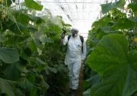 Andalucía aboga por simplificar el registro de bioplaguicidas para reducir los costes y agilizar los trámites administrativos