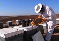 """UPA: """"Los apicultores españoles acumulan pérdidas de hasta un 60% por la sequía"""""""