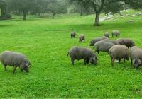 El consejero de Agricultura anuncia que el Centro de Estudios para la Dehesa se ubicará en la provincia de Córdoba