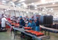 Agricultura publica en el BOJA el Decreto de Entidades Asociativas Prioritarias Agroalimentarias de Andalucía