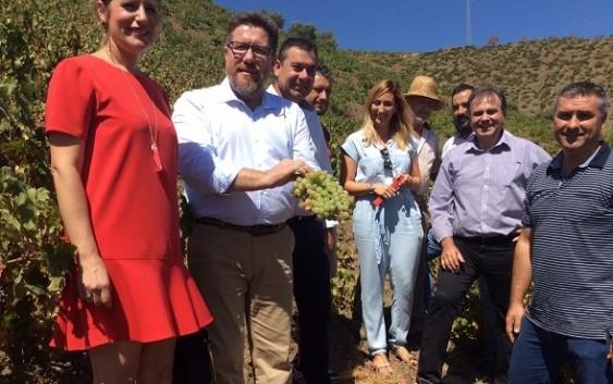 Sánchez Haro destaca el respaldo a 2.000 familias que supone la declaración de la uva pasa como Patrimonio Agrícola Mundial