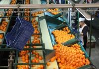 El Gobierno andaluz aprueba un decreto para impulsar el crecimiento de las cooperativas agroalimentarias andaluzas