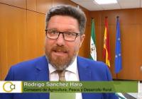 """Rodrigo Sánchez: """"El apoyo de la Junta de Andalucía al sector de la aceituna de mesa es total"""""""