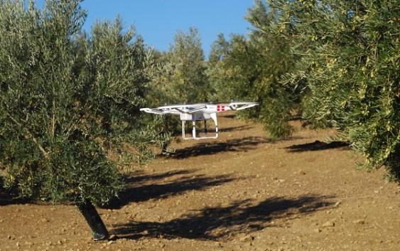 La Junta aumenta en casi 2,2 millones más la inversión en innovación agroalimentaria a través de los Grupos Operativos