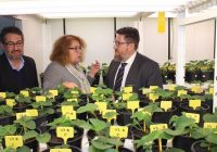 Rodrigo Sánchez resalta la labor del Ifapa en la mejora de la productividad y sostenibilidad de las explotaciones agrícolas