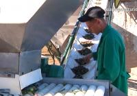 VÍDEO: Almazara portátil para aceite ecológico en Osuna