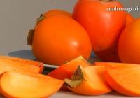VÍDEO: La campaña del Caqui en la Vega del Guadalquivir