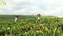 Agricultura cede el uso de las instalaciones de la Estación Enológica de Montilla para potenciar el sector vitivinícola