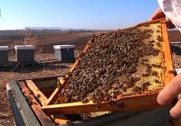El sector apícola de COAG se movilizará el próximo 11 de diciembre en 18 capitales de provincia