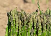 Agricultura introduce mejoras en el procedimiento para las excepciones a la conversión a la Producción Ecológica