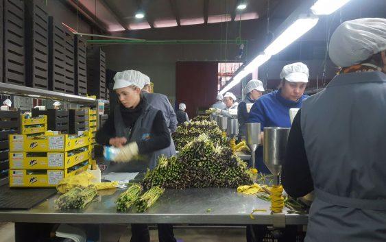 Agricultura lanza una segunda orden de ayudas a las agroindustrias con una dotación de 68,6 millones