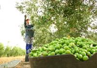 El Gobierno duplica la ayuda complementaria a los jóvenes agricultores dentro del régimen de ayudas de pagos directos de la PAC
