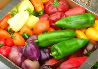 Cooperativas Agro-alimentarias de Huelva trata con la Delegación de Agricultura los programas en el sector hortofrutícola