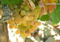 La producción provisional de vino y mosto en la actual campaña 2017/18 se sitúa en 35,6 millones de hectolitros
