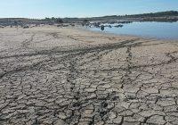 """Ecologistas en Acción: """"La mala gestión de la sequía sitúa al borde del colapso a los humedales"""""""