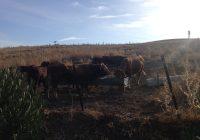 Los ganaderos cordobeses son indemnizados con casi seis millones de euros en siniestros por pérdida de pastos