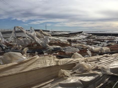 Los productores granadinos y almerienses afectados por viento y lluvia pueden presentar los informes de daños hasta el día 16