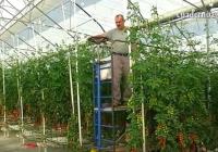 Agricultura destina ayudas a la modernización de explotaciones, a los jóvenes agricultores y al Plan Renove de Invernaderos