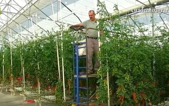 La Junta convoca otros 10 millones de euros de ayudas para la modernización de invernaderos