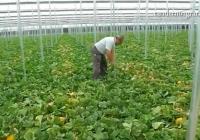 Andalucía y Murcia, los territorios donde más se optimiza el agua en la producción agrícola gracias a los invernaderos
