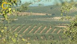 El Gobierno aprueba la distribución de 143,4 millones entre las CC.AA para programas agrícolas, ganaderos y de desarrollo rural