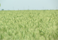 El enfoque de UPA Andalucía para afrontar el cambio climático en la agricultura