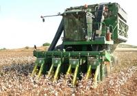 La producción de algodón crece un 28,3% y roza las 195.300 toneladas, un 4,2% mejor que la media de los últimos años