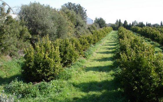 La Junta fomenta una producción agraria más sostenible y ecológica con la convocatoria de otros 59,4 millones de euros