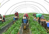 UPA Andalucía analiza la situación de la fresa y los frutos rojos en Huelva
