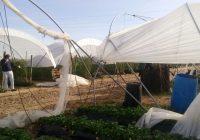 UPA Andalucía sondea los efectos del temporal de lluvia y viento en Andalucía