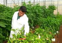 VÍDEO: Innovación en el manejo de cultivos en Almería