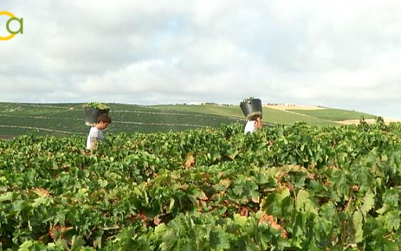 """García Tejerina: """"El sector vitivinícola español ha sabido aunar tradición e innovación para adaptarse a los retos"""""""