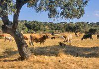"""La Junta ratifica el respaldo a la ganadería extensiva como el """"mejor ejemplo"""" de producciones de calidad y sostenibilidad"""
