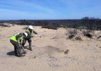 Una empresa cordobesa entrega 160 kilos de semillas para la recuperación de la zona incendiada de Doñana