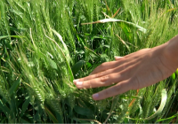 El Gobierno reduce el IRPF a los productores de cereales, leguminosas, patata, fruta de hueso, bovino de leche entre otros
