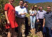 Sánchez Haro recogerá en Roma la acreditación de la FAO a la uva pasa moscatel como patrimonio agrícola mundial