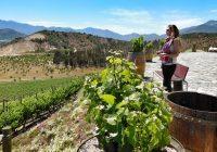 """Jaime Haddad: """"El enoturismo está generando un gran cambio económico y social en las regiones españolas vitivinícolas"""""""